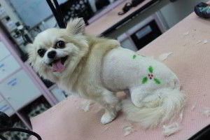 customised dog grooming