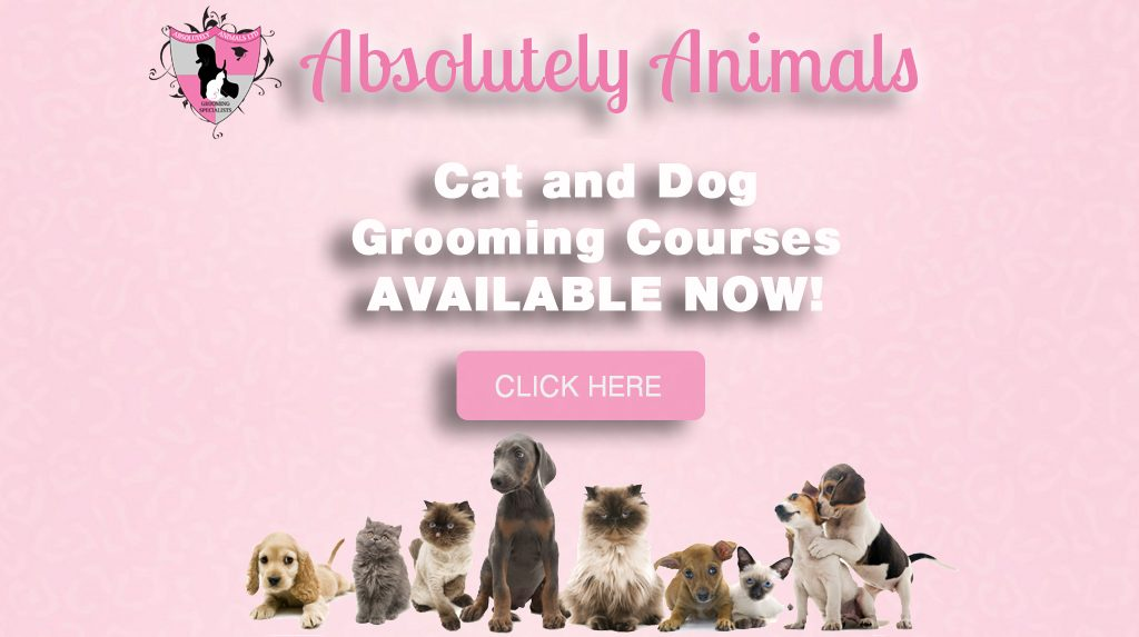 Absolutely Animals Dog And Cat Grooming Grooming Courses