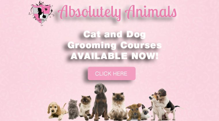 Dog Grooming And Cat Grooming In London Se12 Absolutely Animals Ltd