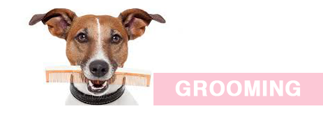 7f06d4bd855 Dog Grooming and Cat Grooming in London, SE12- Absolutely Animals Ltd
