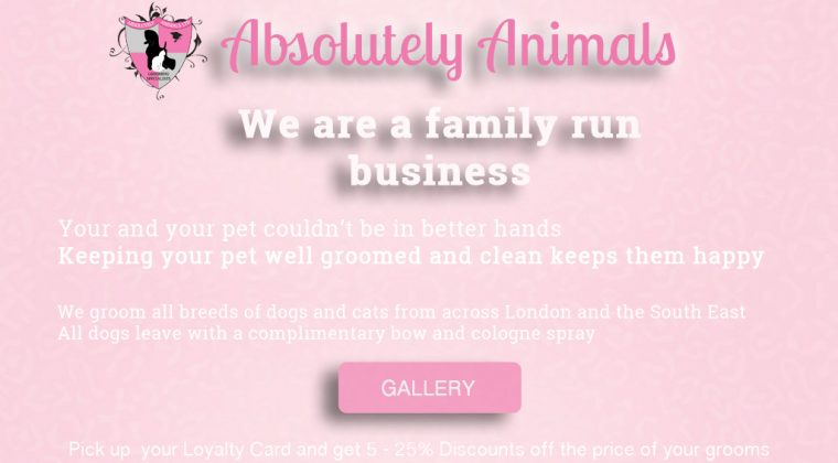 absolutely animals dog and cat grooming gallery
