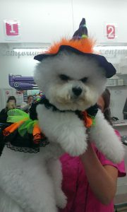 dog grooming witch costume