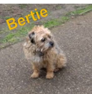 Bertie before