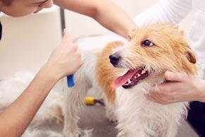 dog grooming hand strip