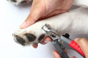 dog-nails_316414508