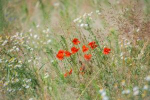 meadow_381178585