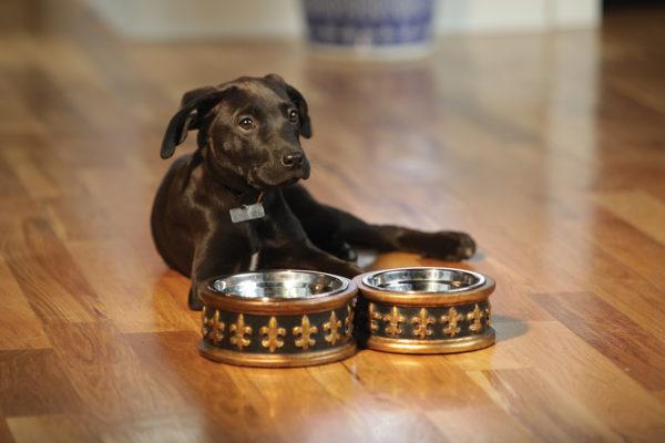 Chartres-Enviro-2 dog bowls