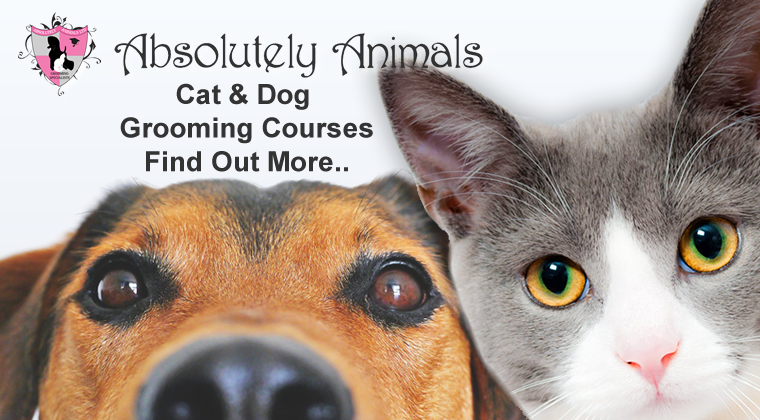 cat and dog grooming courses