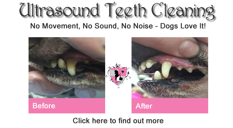 ultrasound teeth cleaning