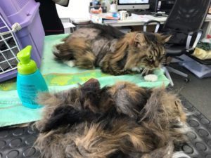 Matted Cat absolutely Animals