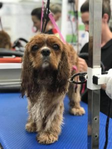 Dog grooming at Absolutely Animals