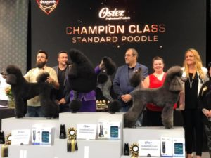 Christine Anderton Absolutely Animals International Award winning groomer
