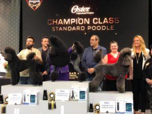 Christine Anderton Absolutely Animals International Award winning groomer